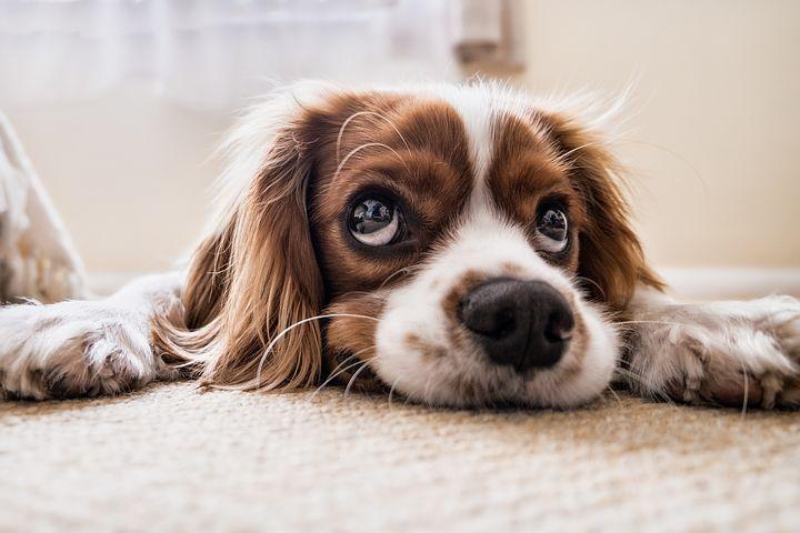 Come fotografare : un animale domestico?