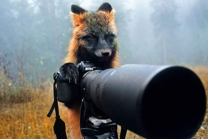 Fotografie meravigliose