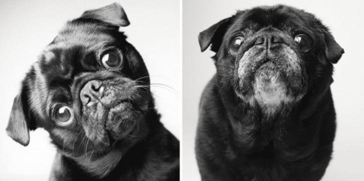 Foto invecchiamento cani :Amanda jones