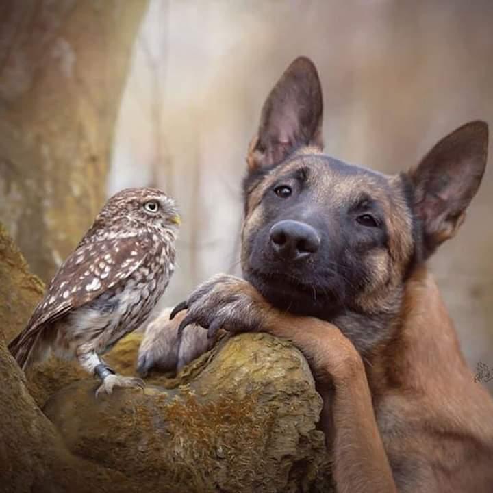 Gufo e cane