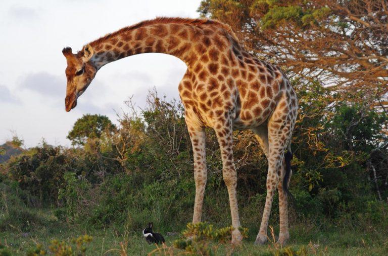 Amicizie strane tra animali