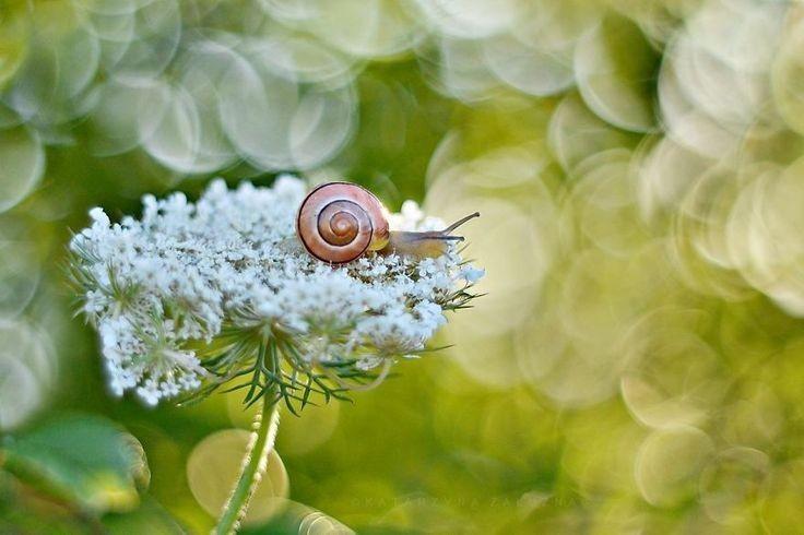 Il -mondo- macro -delle -lumache fotografie- bellissime