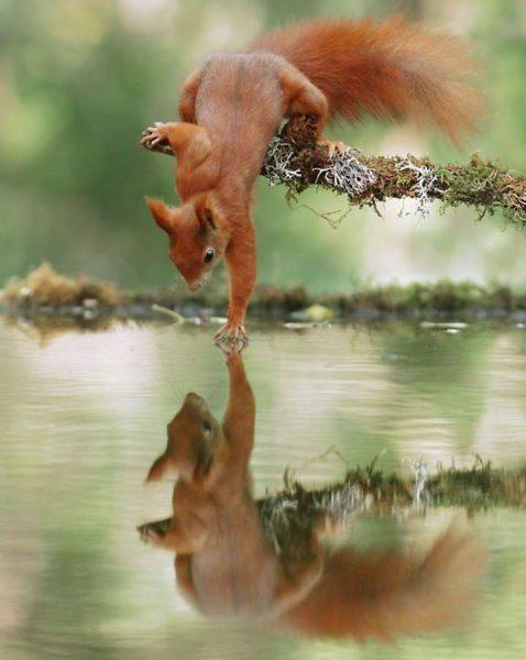 Foto naturalistiche