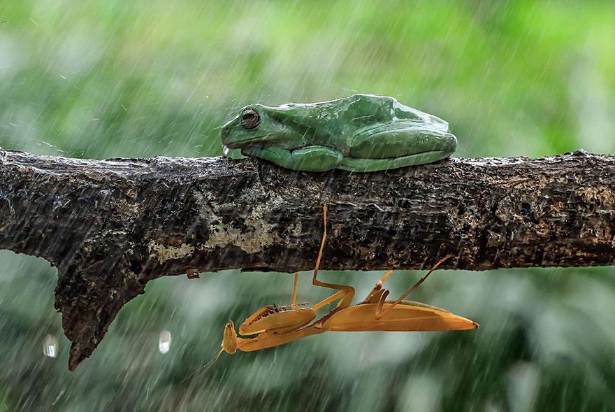 Fotografi di animali selvatici