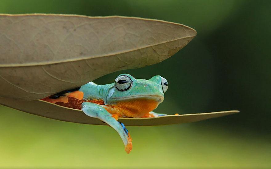 Immagini naturalistiche