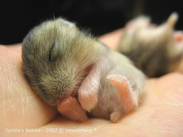 fotografie di animali appena nati che sono difficili da vedere