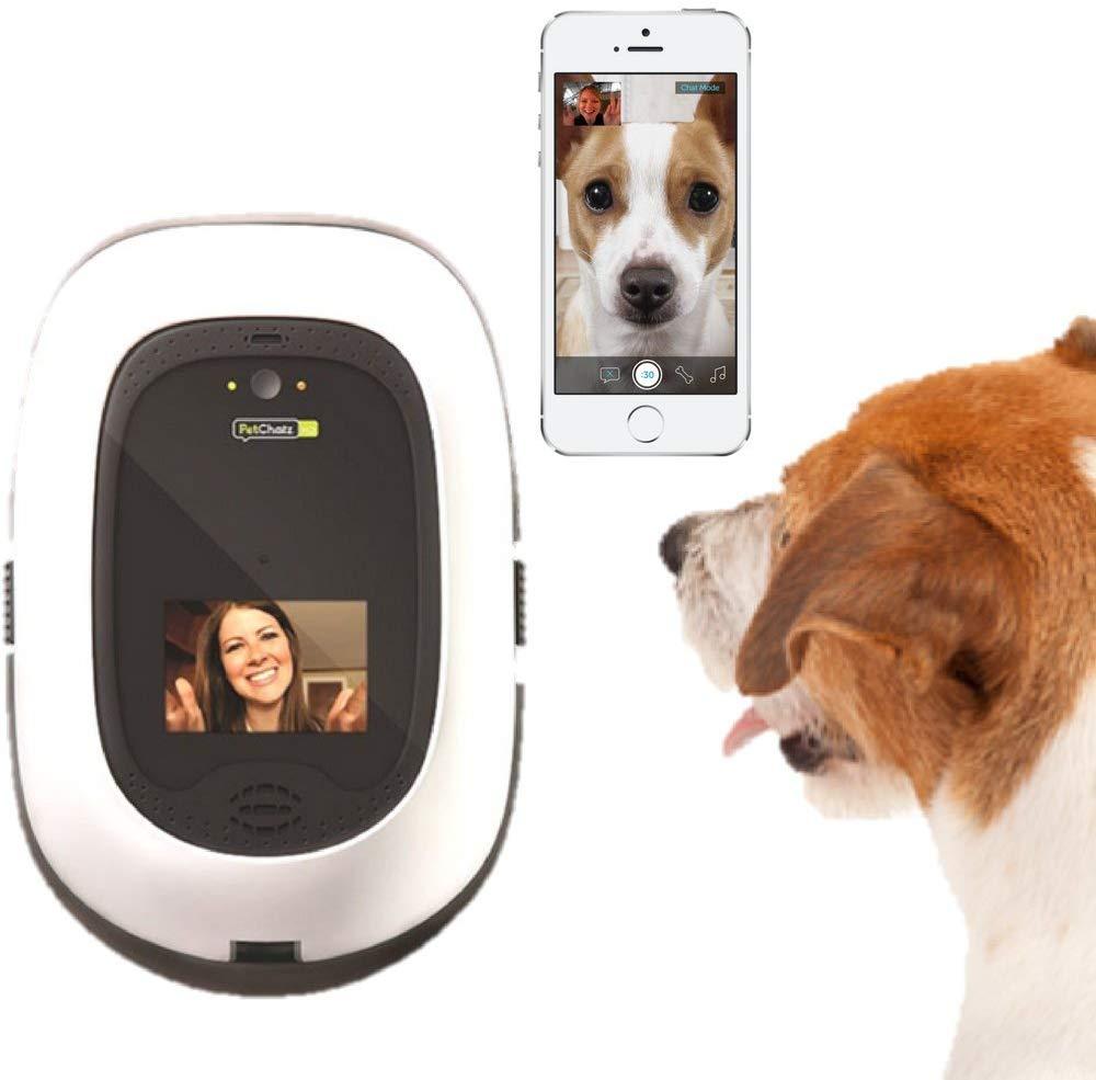 Telecamere migliori per cani e gatti