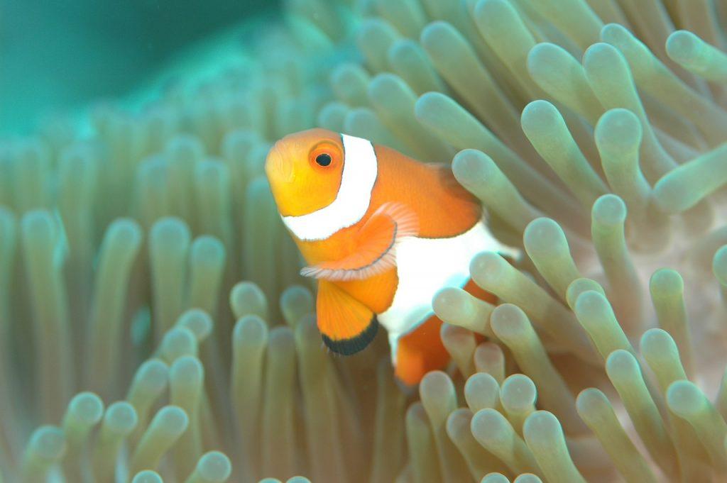 migliori videocamere subacquee